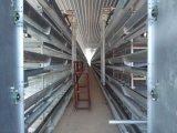 Aves de capoeira de frangos prefabricadas Xgz House/Fazenda Galpão de aves de capoeira (GR-009)