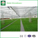 Invernadero Hoja Customizedpc de alta calidad con sistema hidropónico para la venta