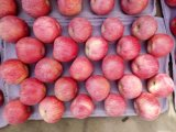 Nuova raccolta Qinguan rosso fresco cinese Apple