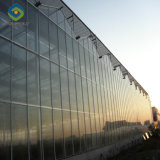 Commercialのための工場Price Venlo Glass Greenhouse Used