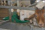 De hoge Kom van het Drinkwater van het Koper van de Gevoeligheid Duurzame voor het Landbouwbedrijf van de Geit