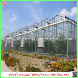 Serra favorevole delle patate della lamiera sottile del policarbonato dalla fabbrica della Cina