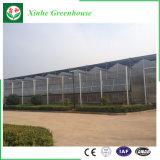 Garten-Polycarbonat PC hohles und Solarblatt-Gewächshaus