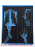 Médicos clínicos placa de rayos X.