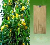 Anti-UVwachs-überzogener Wasser-Beweis-Guajava-Trauben-Mangofrucht-Frucht-Schutz-Beutel für Frucht-wachsendes