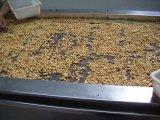 Amendoins picantes com alta qualidade