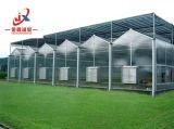 Venlo-PC Blatt-Gewächshaus mit Frucht-Produkt