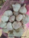 Aglio bianco puro di stile fresco di alta qualità da Shandong, Cina