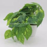 가정 장식을%s 실제적인 접촉 플랜트 토란과 덩굴 식물