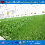 La película de plástico agrícola Multispan Greehouse túnel para el tomate