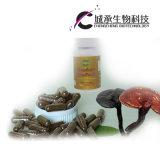 Capsula di erbe dell'estratto di Ganoderma Lucidum di supplemento di salute di 100% che dimagrisce capsula