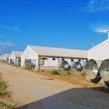 [برفب] [ستيل ستروكتثر] بناية من [قينغدو] [هبي] مزرعة بناء