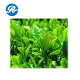 Косметический Чай Polyphenol (CAS 989-51-5)