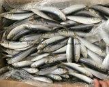 Pescados de los mariscos de las sardinas 16cm+ del cebo de China