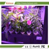 Hydroponic 플랜트 증가를 위한 Keisue 성장하고 있는 쟁반