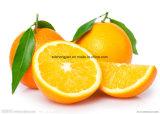 Peau de GMP blanchissant l'OEM de comprimé à croquer de vitamine C