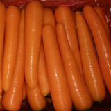 Neues Harvest Good Quality von Fresh Carrot (80-150g)