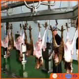 양 도살 선 기계 도살장 장비 어린 양 산양 양 렘 푸줏간 주인 플랜트 도살장을%s 가진 Halal 살해 상자