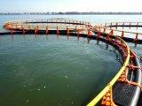 純係留システムが付いている浮遊養魚場のケージ