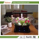 Keisue LEDは軽いHydroponicマイクロ農場を育てる