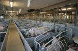 Пер свиньи оборудования свиньи порося в Китае