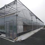 중국 공장 공급 Venlo 유리 온실