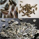 밀 참깨 옥수수 콩 해바라기 씨 세탁기술자 벼 분리기