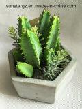 O PVC Cactus planta artificial envasadas de decoração (50004)