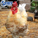 Grillage hexagonal Wire Mesh de poulet de haute qualité
