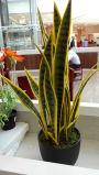 جيّدة يبيع اصطناعيّة معمل وزهرات [سنسفريا] [1091-27-9ب]