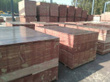 Madera contrachapada Shuttering de la base del álamo/madera contrachapada de la construcción
