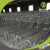 Neuer Typ einzelner Stall mit im modernen Schwein-Bauernhof