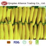 Zucchini inteiro amarelo fresco