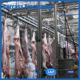 Attrezzature del mattatoio per 50 Cattles e 100 pecore all'ora