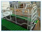 Гальванизированный ящик созревания Pig оборудование Farrowing кровать