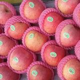 과수원 신선한 빨간 Qinguan Apple에서 공급