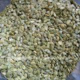 Los mejores granos de la semilla de calabaza de la piel del brillo de la calidad de China