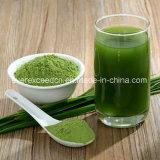 Poudre organique hydrosoluble d'herbe d'orge de 100% et poudre d'herbe de blé en vrac