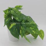 가정 장식을%s 실제적인 접촉 토란과 덩굴 식물