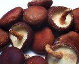 Extrait de champignons Shitake pour les aliments et de compléter