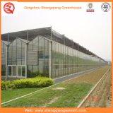 ローズまたはポテトのための庭または農場またはトンネルのマルチスパンのガラス温室