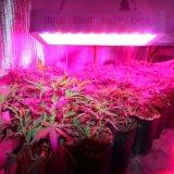 La cultivación de la planta ornamental crece la luz