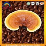 Hongo Ganoderma mezcla de café para Healthy Producto