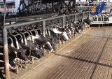 Mini Línea de producción lechera Planta de Procesamiento / Leche