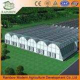 Po/PE Plastic-Film agricole pour cultiver des légumes de serre