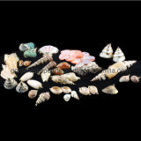 Gemstone de perles fantaisie Pendentif coquille colorée