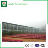 Type de Venlo serre chaude en verre d'envergure multi pour l'agriculture/légume/plante/fleur