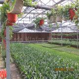 Serra del film di materia plastica di disegno moderno per agricoltura usata