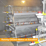 Pullet Raising Equipment with Battery Cages
