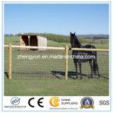 Сплетенная загородка ячеистой сети и загородка лошади
